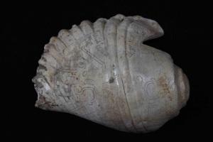 Uno de los pututus de Chavín, Strombus galeatus (caracol) trompetas de concha. Créditos: por Jyri Huopaniemi