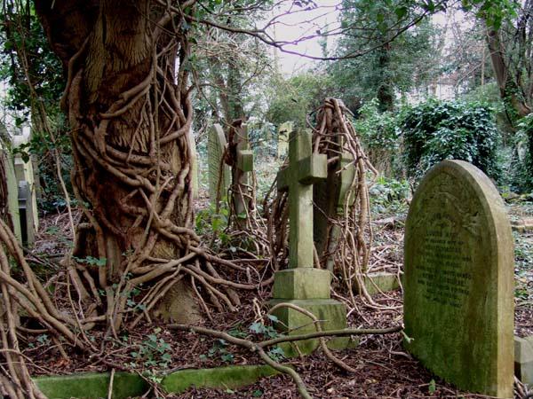 highgate_cemetery FOTO 10_vines