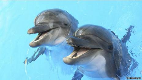 Nuestros nuevos líderes supremos delfines...en otro universo.