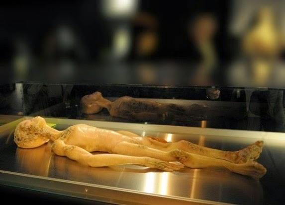 Los investigadores que han podido ver las diapositivas destacan que no se trata de un burdo fraude o un montaje elaborado con un simple muñeco. Sea lo que sea, el humanoide que se observa en las imágenes, aseguran, corresponde a un ser real... la duda es averiguar si se trata de un ser humano o una entidad extraterrestre...