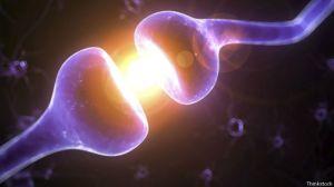 El doctor Hayworth cree que la clave de este plan es establecer el conectoma, el mapa de las complejas conexiones de las neuronas del cerebro.